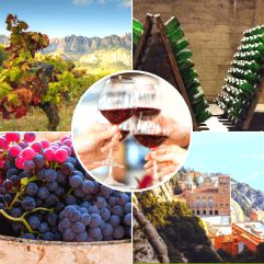 Montserrat and Penedes Wine Tours