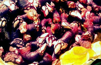 Weird Spanish food: Percebes