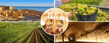 Wine Tarragona Day Tour from Barcelona Spain